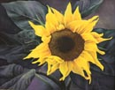 Single Sunflower 16x20 Woil/Oil $10.00