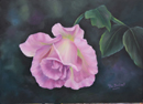 Pink Rosebud in oil $7.00